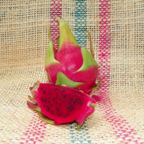 Sin Espinas Dragon Fruit Spicy Exotics