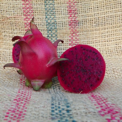 Armando Dragon Fruit variety fruit