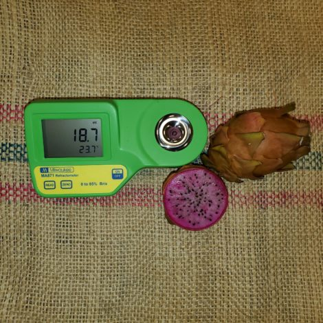 Asunta 3 Purple Dragon Fruit Brix