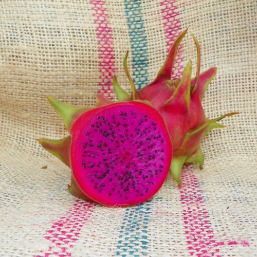 Dragon Fruit variety Bien Hoa Red fruit