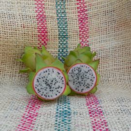 Dragon Fruit variety Bruni fruit spicy Exotics