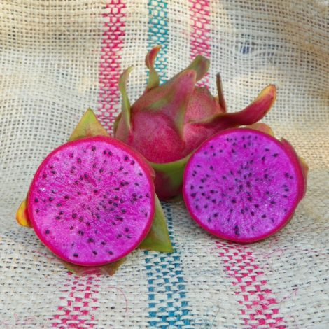 Cosmic Charlie Dragon Fruit
