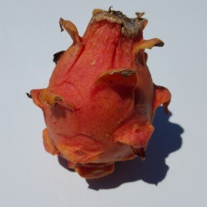 Dragon Fruit variety Frankies Red fruit