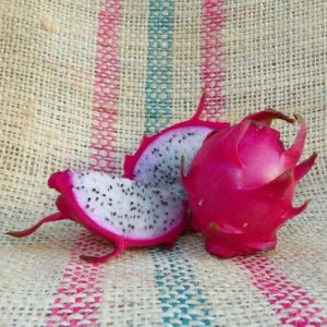 Dragon Fruit variety Hana fruit Spicy Exotics