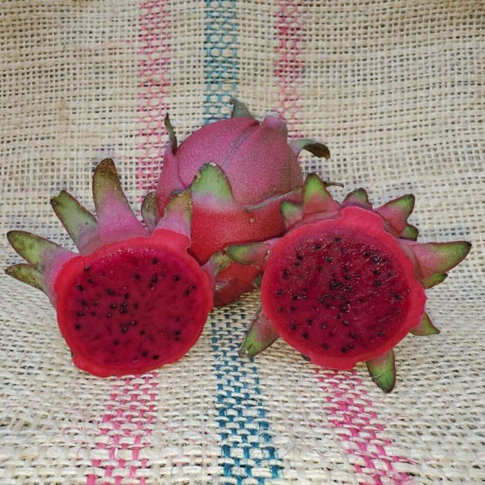 Lisa Dragon Fruit Spicy Exotics