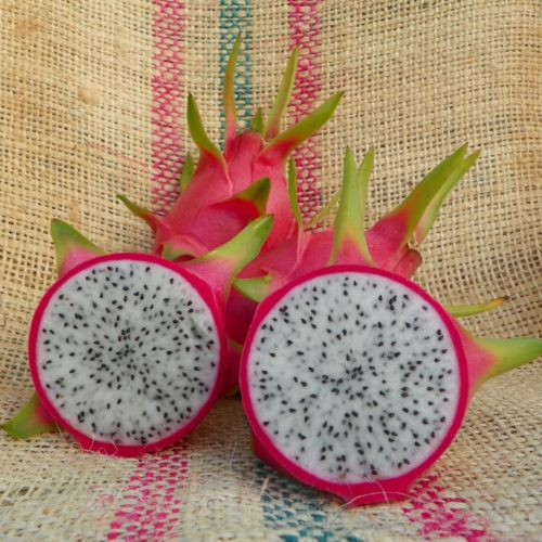 Dragon Fruit variety Mexicana by Spicy Exotics