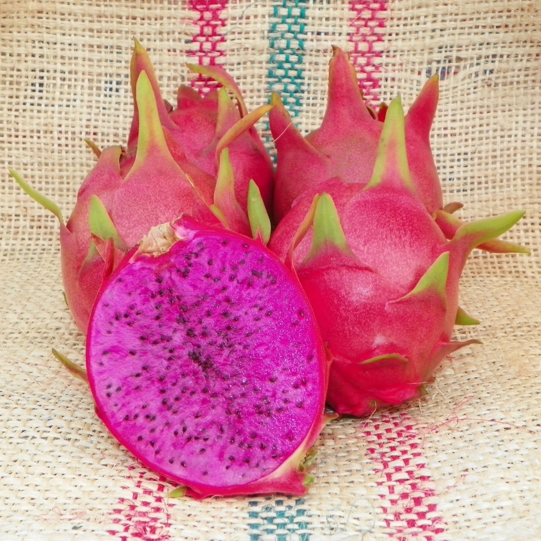 Purple Haze Dragon Fruit