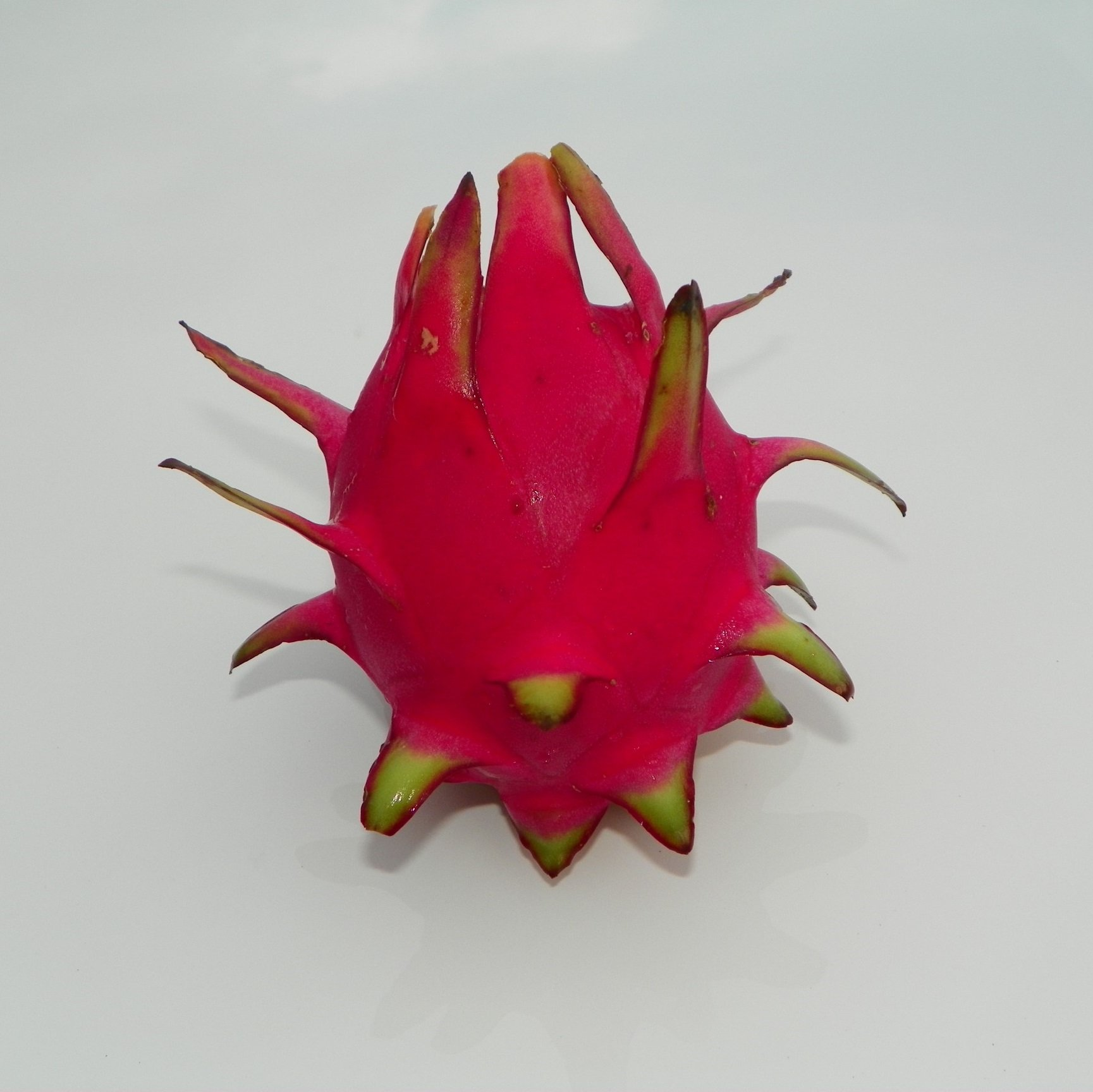 Dragon Fruit variety Hylocereus Polyrhizus fruit