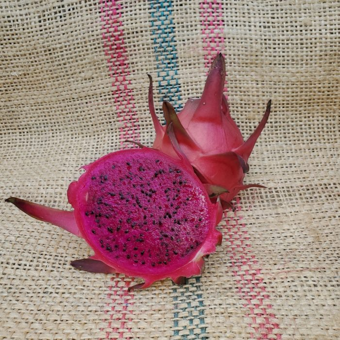 Red ES1 Dragon Fruit Spicy Exotics
