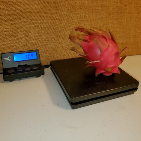 Red ES1 Dragon Fruit Weight