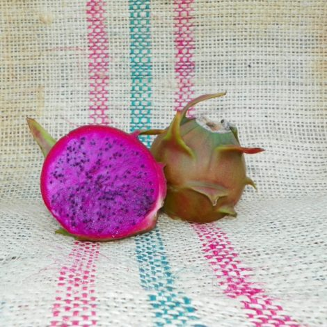 Dragon Fruit variety Rixford fruit Spicy Exotics