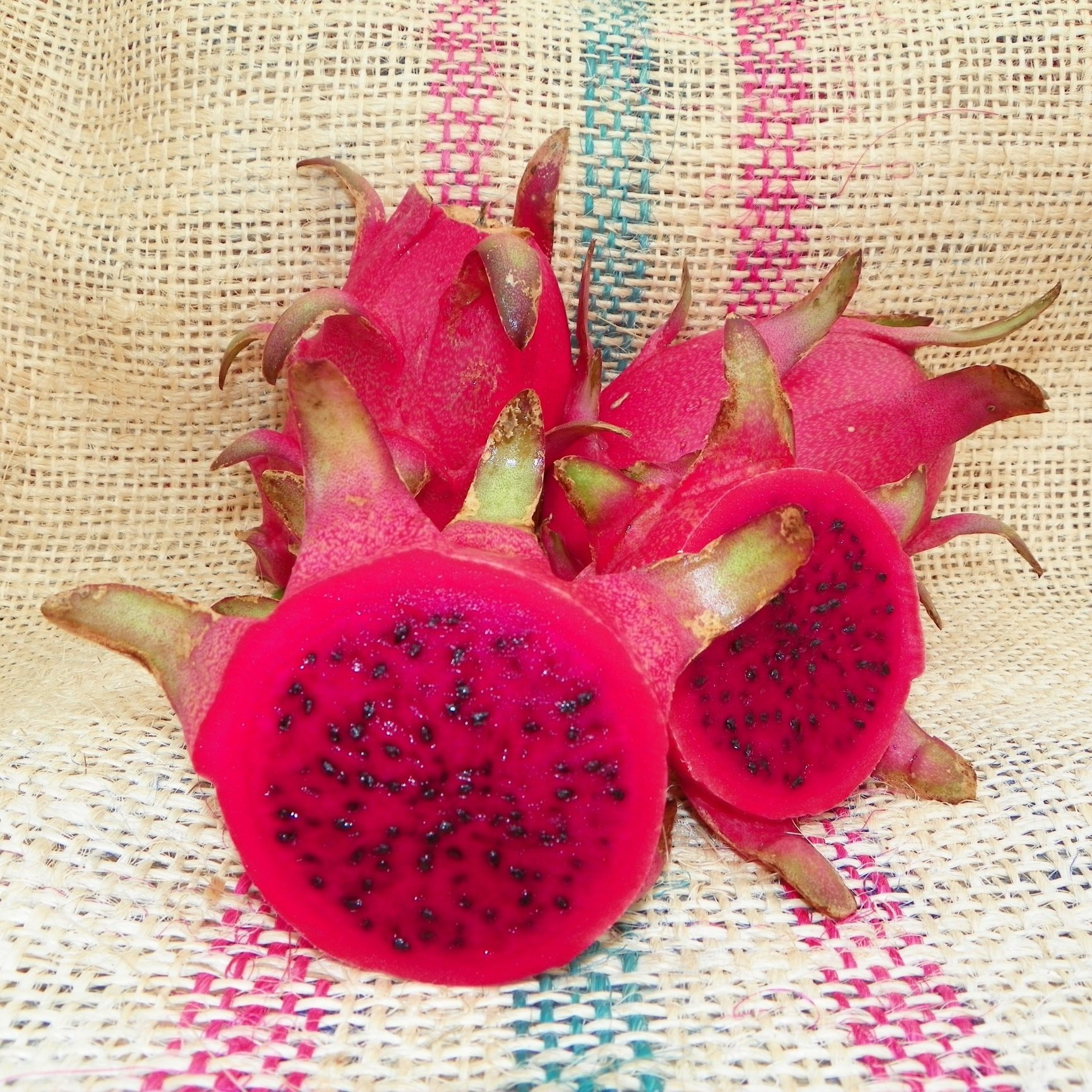 Dragon Fruit variety Rosa by Spicy Exotics
