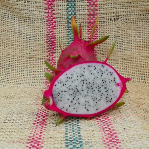 Dragon Fruit variety K1 fruit from Spicy Exotics